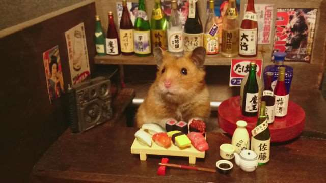 bartending_hamsters_are_one_of_the_cutest_things_ever_640_08