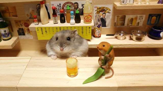 bartending_hamsters_are_one_of_the_cutest_things_ever_640_10