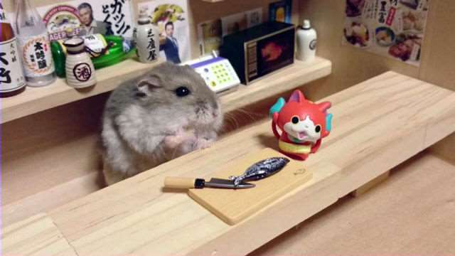 bartending_hamsters_are_one_of_the_cutest_things_ever_640_14