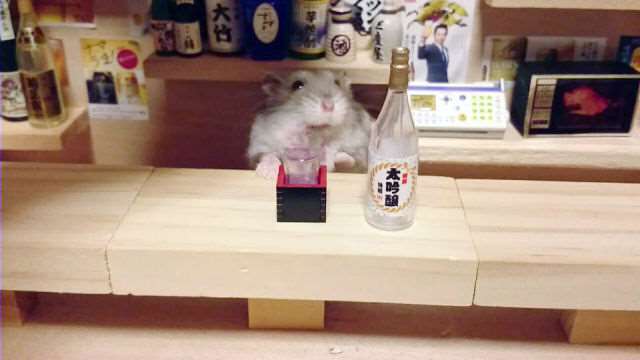 bartending_hamsters_are_one_of_the_cutest_things_ever_640_18