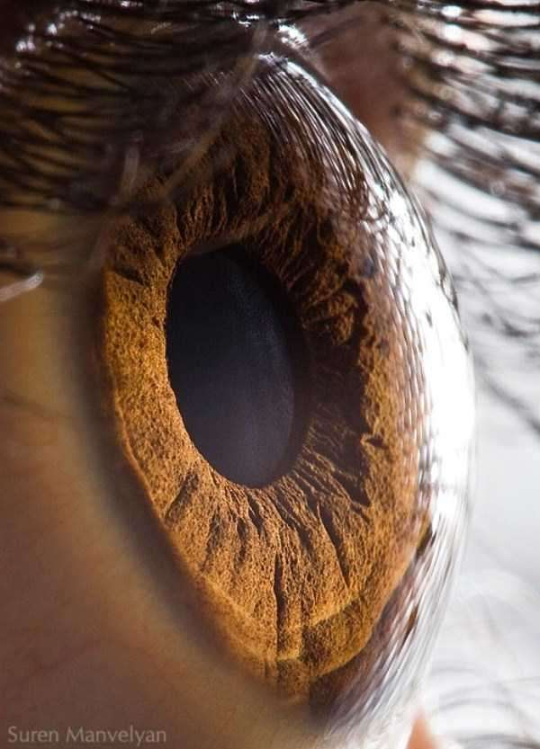 extreme-close-up-of-human-eye-macro-suren-manvelyan-1