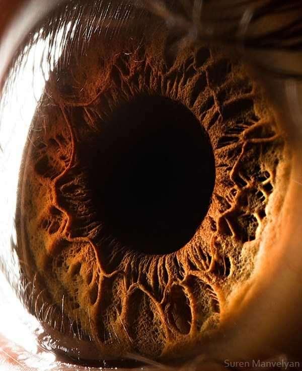 extreme-close-up-of-human-eye-macro-suren-manvelyan-17