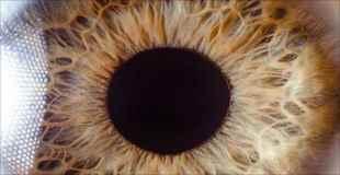 【画像】人間の目をどアップで見ると結構ヤバかった