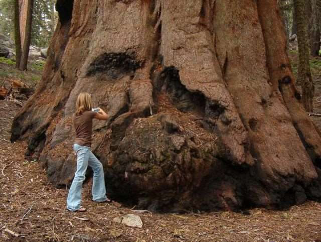 a_massive_ancient_tree_that_is_bigger_than_youd_believe_640_08