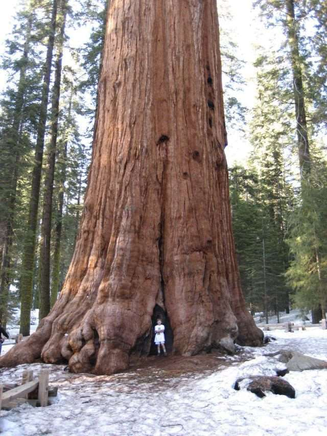 a_massive_ancient_tree_that_is_bigger_than_youd_believe_640_high_02