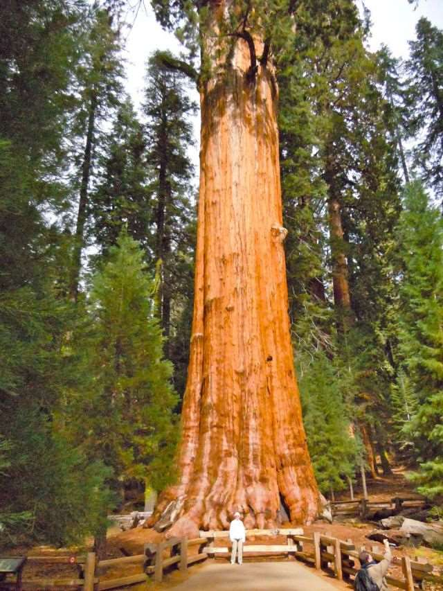 a_massive_ancient_tree_that_is_bigger_than_youd_believe_640_high_03