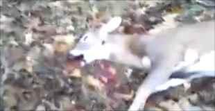 【動画】ハンターが林の中で死んだ鹿に出会った結果…