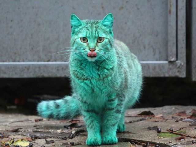 bulgaria_is_home_to_the_first_green_cat_in_history_640_05