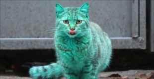 【画像】全身が緑色の猫がブルガリアで発見される