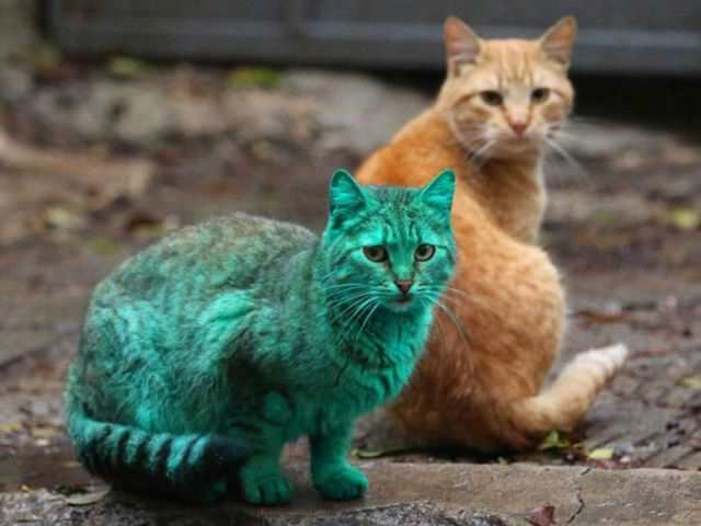 bulgaria_is_home_to_the_first_green_cat_in_history_640_06