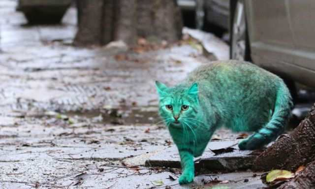 bulgaria_is_home_to_the_first_green_cat_in_history_640_07