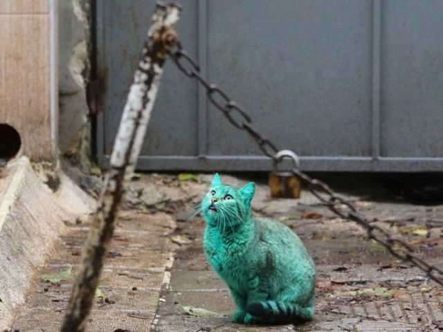 bulgaria_is_home_to_the_first_green_cat_in_history_640_09