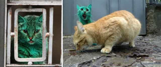 bulgaria_is_home_to_the_first_green_cat_in_history_640_10