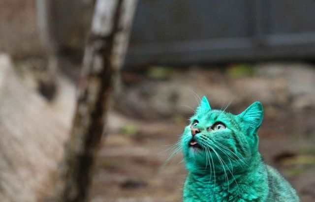 bulgaria_is_home_to_the_first_green_cat_in_history_640_11