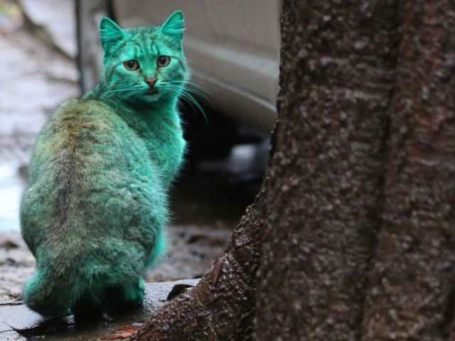 bulgaria_is_home_to_the_first_green_cat_in_history_640_12