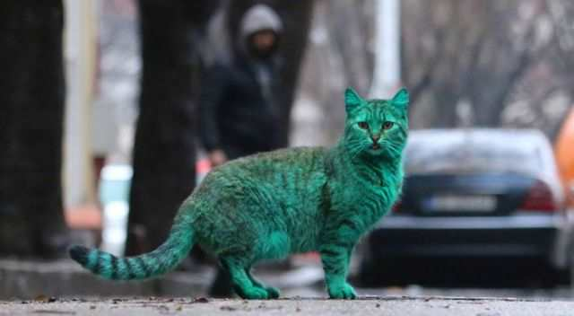 bulgaria_is_home_to_the_first_green_cat_in_history_640_13