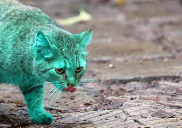 bulgaria_is_home_to_the_first_green_cat_in_history_oOMHF_640_12