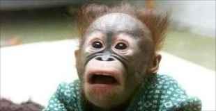 【画像】ビックリ顔で撮られちゃった動物達可愛すぎw