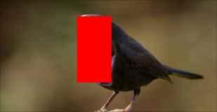 【画像】この口がデカ過ぎる鳥怖すぎw