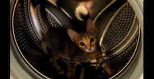 【可愛い】ネコがドラム式洗濯機でハムスターの回し車のように走ってるw