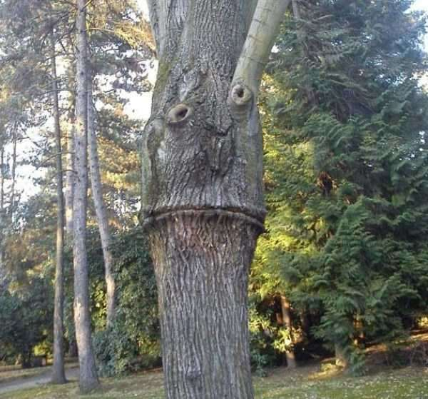weird-faces-seen-in-things-33
