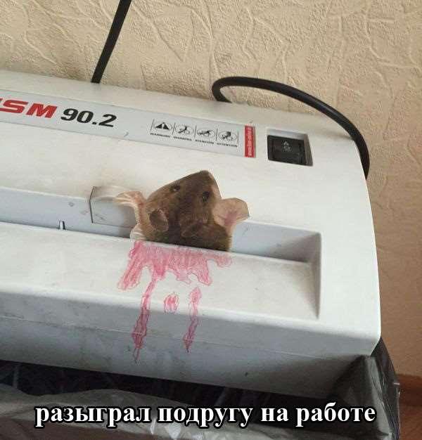 1428234325_podborka_45