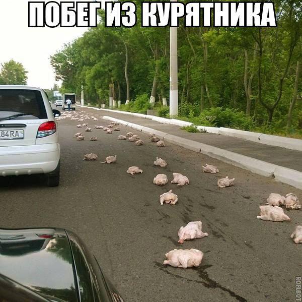 1431523100_podborka_59