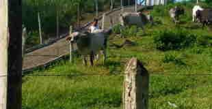 【閲覧注意】牛の頭を斧でカチ割るところを撮影した動画…。
