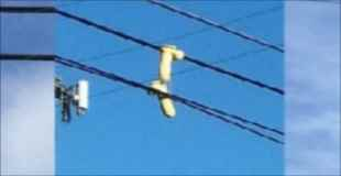電線に大人の○もちゃがひっかかっとるwwwwwwww