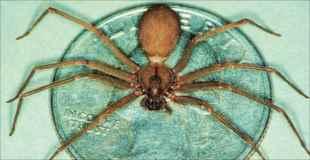 【閲覧注意】めっちゃ猛毒のクモに噛まれた。これはヤバい(画像)