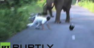 【衝撃動画】ゾウが暴れてる!