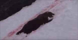 グリズリー(巨大熊)を射殺するの楽しすぎ