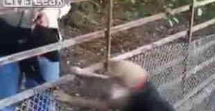 【動画】二匹の犬と豚の対決。