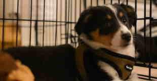 【動画】子犬が初めてギターを聴いたときの反応がカワイイwww
