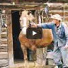 【動画】馬をワンパンでノックアウトしますw
