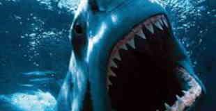 【グロ画像】サメの餌になってしまった人たち・・・ 閲覧注意
