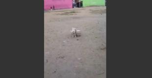 【衝撃動画】あわや重症!!何も知らない犬が着火している打ち上げ花火のもとへ向かってしまい…