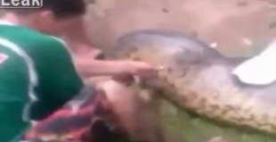 巨大アナコンダが犬を丸飲み!!【動画1本・画像9枚】