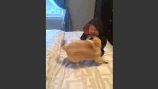 【動画】生後8か月の赤ちゃんと戯れる2匹のパグの動画が癒されるw