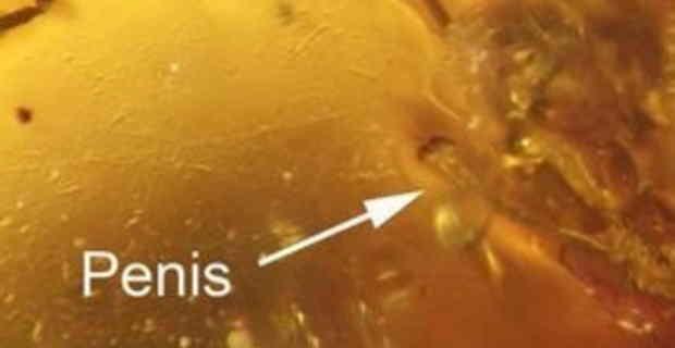 【画像】奇跡!9900万年前の「勃起したチ●コ」が発見される