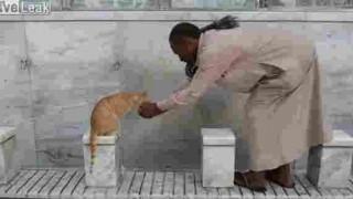 【動画】モスクで猫にお水を上げる男性w