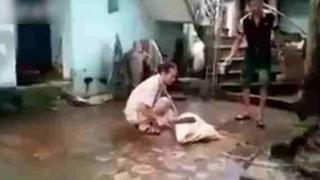 【閲覧注意】犬を飼っている人は見てはいけない動画