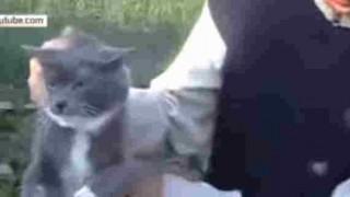 【鬼畜野郎】猫に爆竹を巻きつけて爆破する男が逮捕された…。※動画