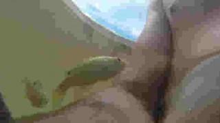 【オモシロ動画】水中から自撮りと魚を撮影していると魚が意外なものに喰いつこうと狙ってたwww