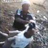 【キチガイ動画】ヤギに対してめっちゃ虐待のような暴行を行う男。
