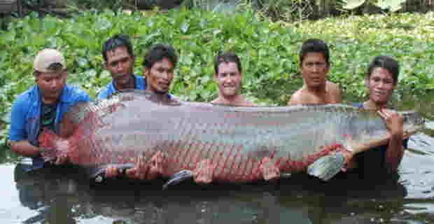 【閲覧注意】巨大魚、陸上で人間に勝つ