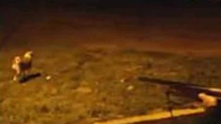 警官がライフル銃で狙撃。モロッコの野良犬駆除方法がなかなか衝撃的だ。