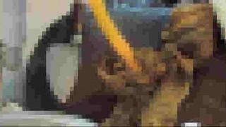 【微閲覧注意】生きたロブスターを刺身としてさばくところがなんかエグい件。