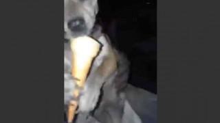 【オモシロ動画】ものすごい勢いで人間の様にアイスクリームを食べるワンちゃんwwwww
