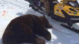 【超・閲覧注意】クマに襲われ顔面崩壊してしまった男性…。※画像3枚。